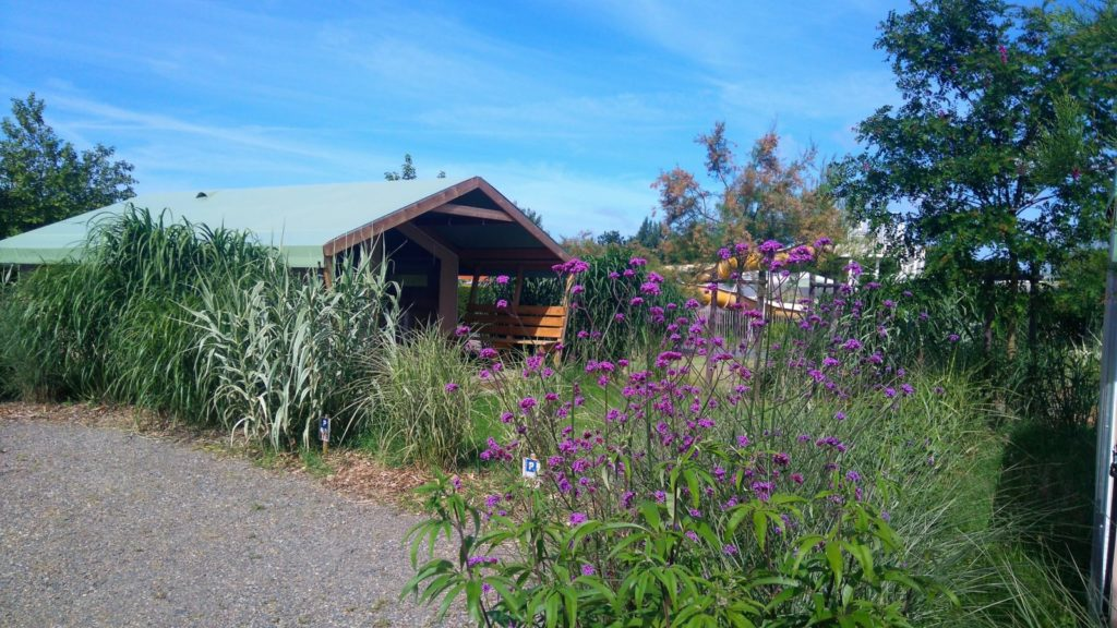 photo camping le petit paris en vendee tente lodge
